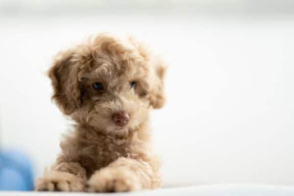 Donner le meilleur nom à mon chien