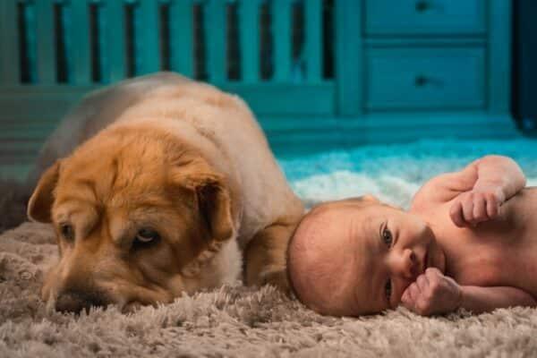 Comment présenter mon nouveau bébé à mon chien
