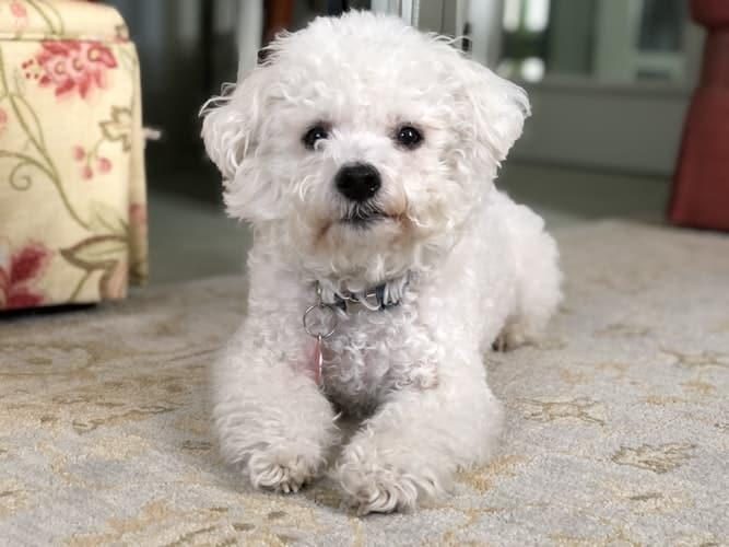Education comment apprendre à son chien à ne pas bouger