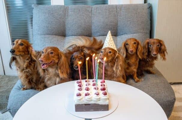 Meilleure façon de célébrer l'anniversaire d'un chien