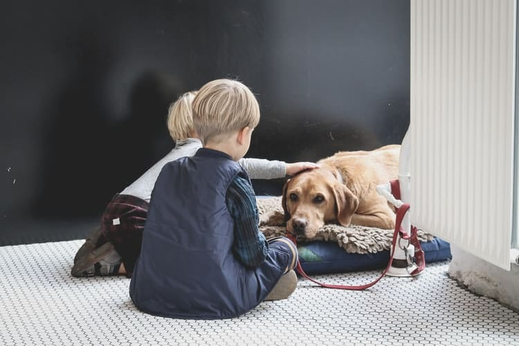 Chien parfait pour famille avec enfants Le labrador