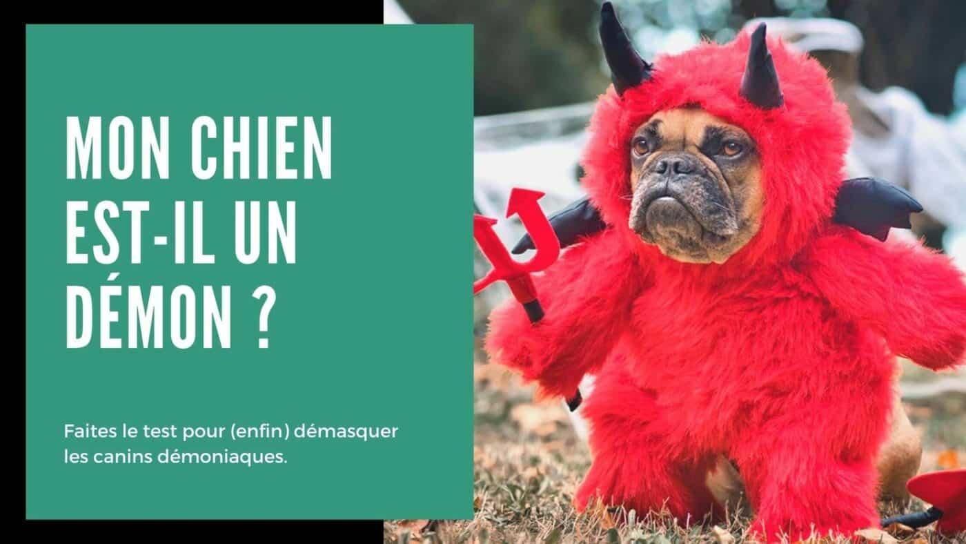 Halloween chien test