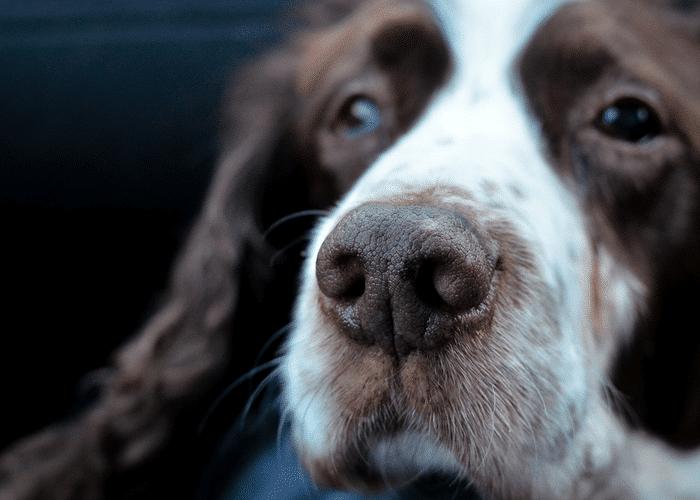 Avis CBD pour chien