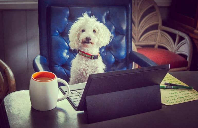 chien drole devant un bureau