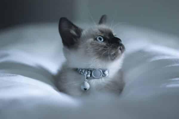 nom de chat