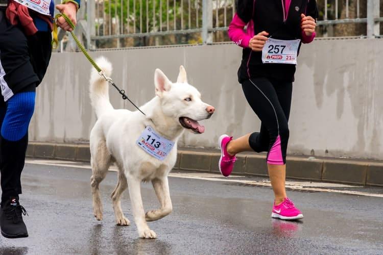 Courir avec son chien conseils