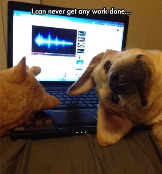 meme chien travail