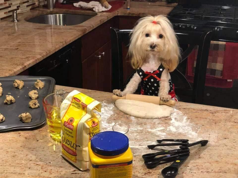 chien qui fait des cookies