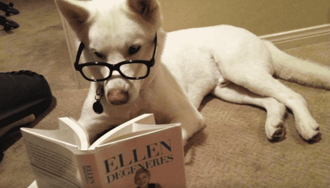 chien qui lit un livre avec lunettes