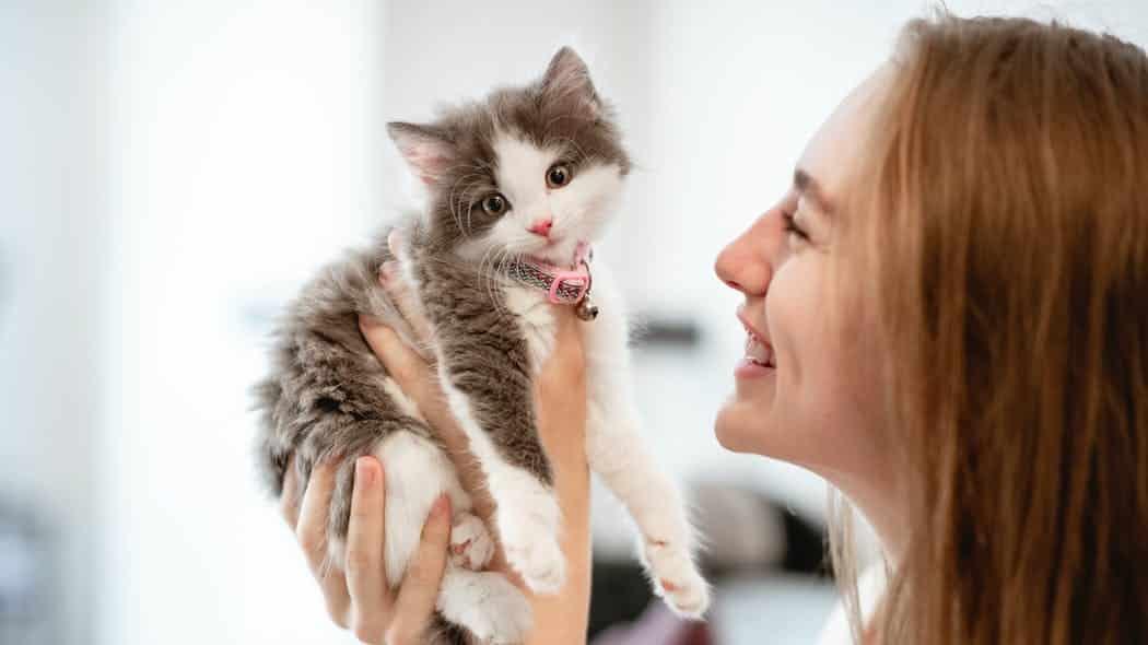 Veterinaire première visite pour un chaton