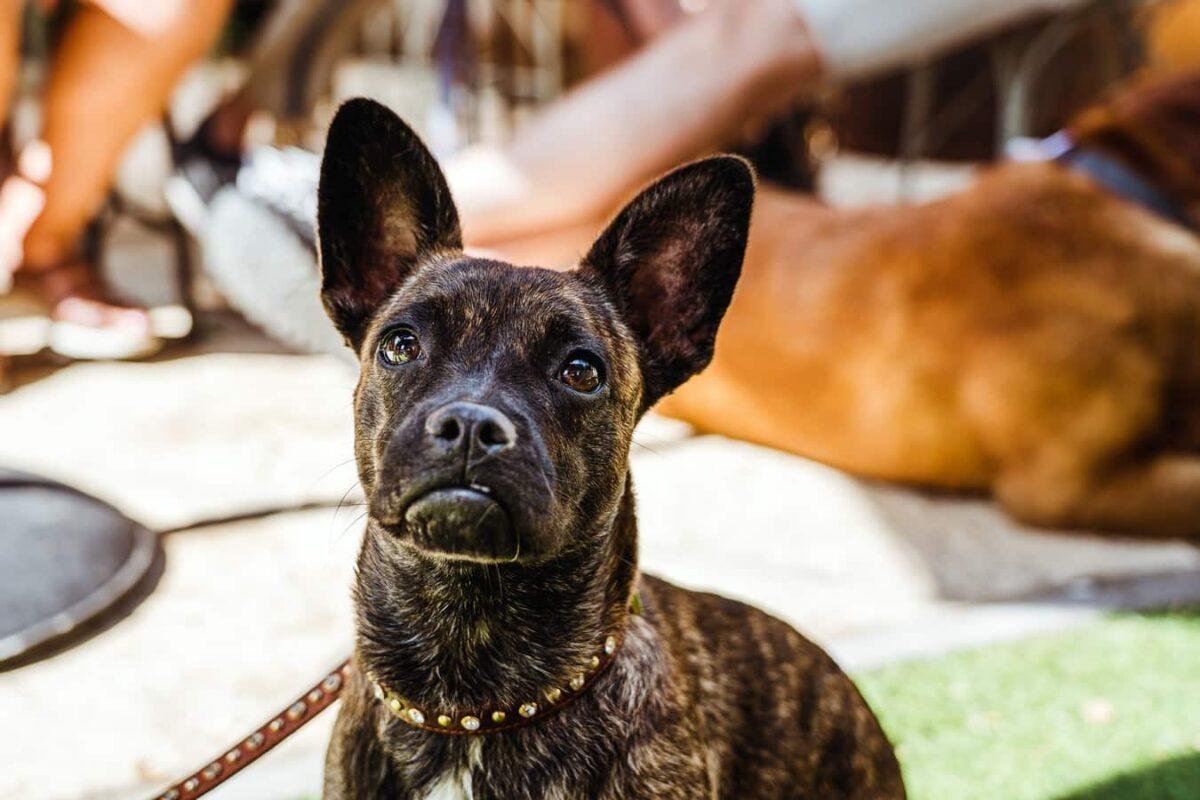 Comment apprendre à son chien à répondre quand on l'appelle par son nom