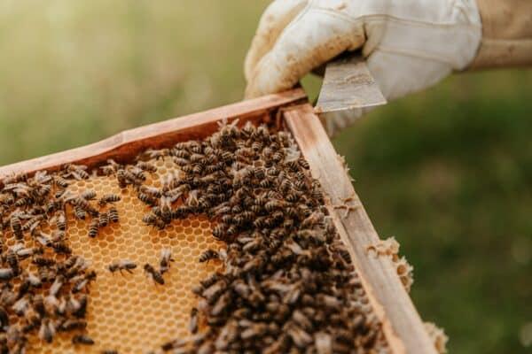 cire d'abeille poils peau chien vertus
