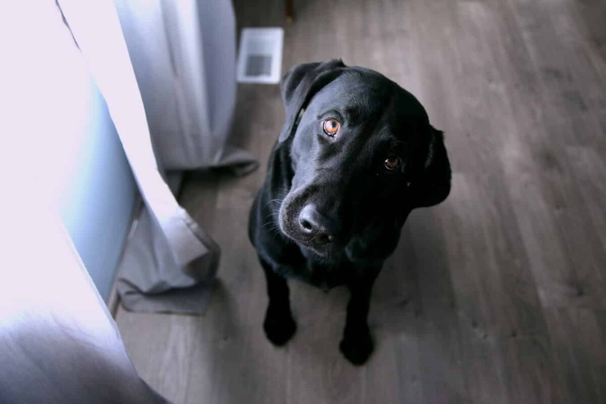 Mon chien a mal au ventre : puis-je lui donner du Spasfon ?
