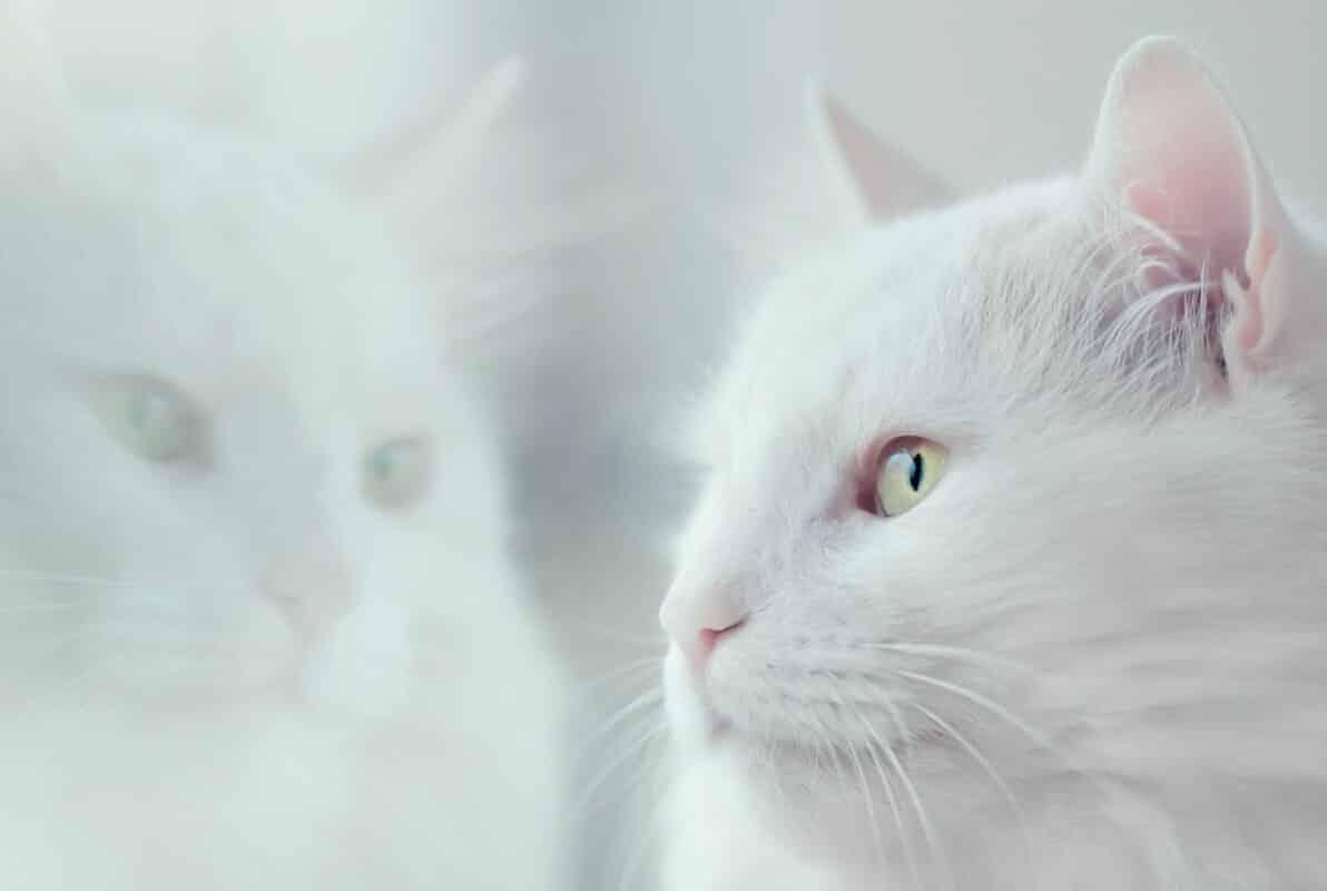 stérilisation chat après citatrisation gratuite