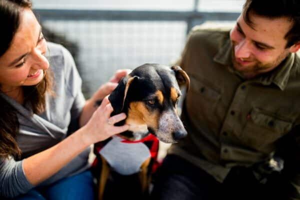 Comment dresser son chien ? Quels sont les conseils qui fonctionnent le mieux ?