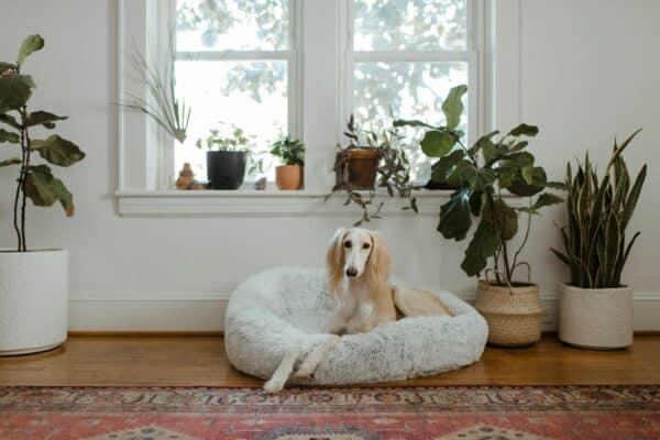 donner tramadol chien vétérinaire bienfait