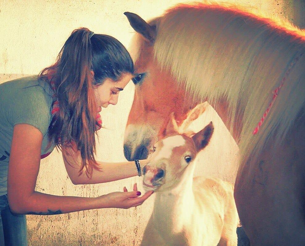 meilleur vétérinaire chevaux