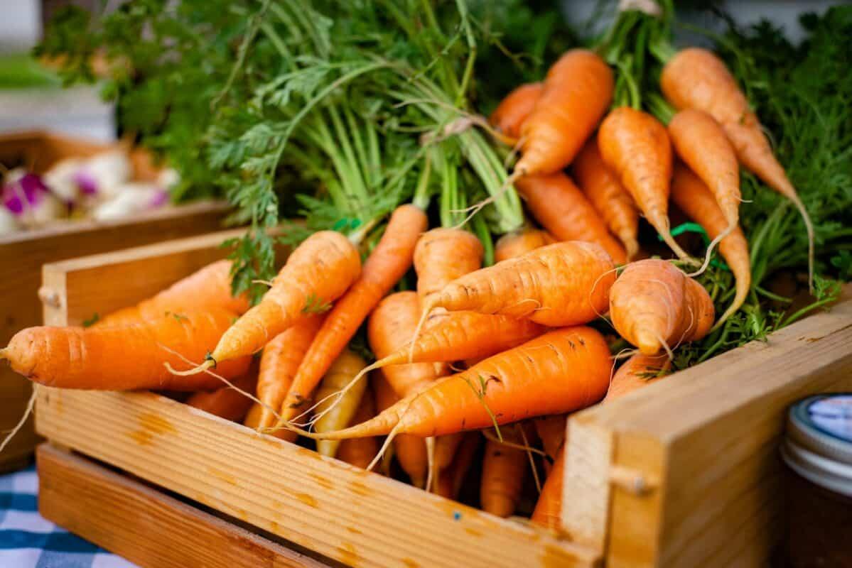Vertu bienfait carottes chiens estomac digestion combien jour