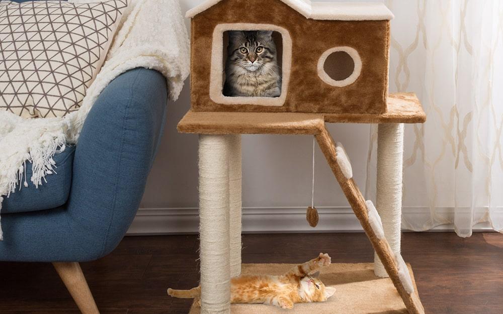 Comment fabriquer son arbre à chat en un rien de temps ? Quels sont les matériaux à utiliser ? Et les outils ? Comment s'y prendre