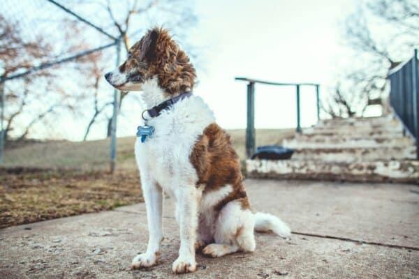 apprendre chien assis assoir chiot technique astuce conseils éducateur