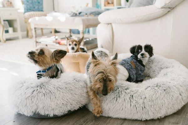 coussin apaisant pour chien
