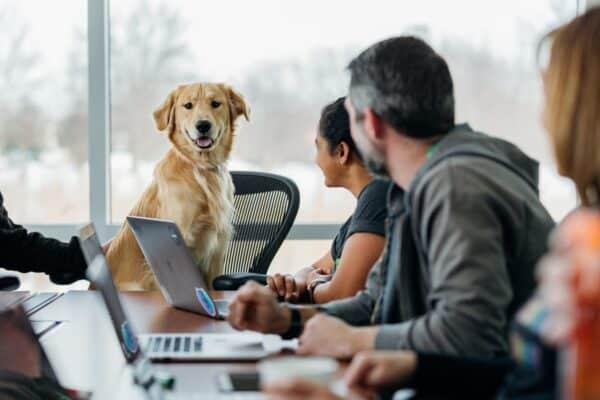 pourquoi prendre son chien au bureau travail bonnes raisons