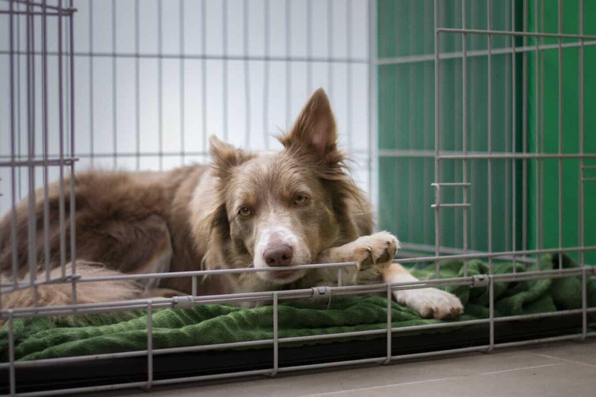 cage chien pourquoi choisir acheter meilleure taille