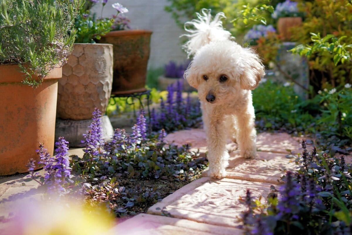 chien comportement creuser jardin pourquoi que faire