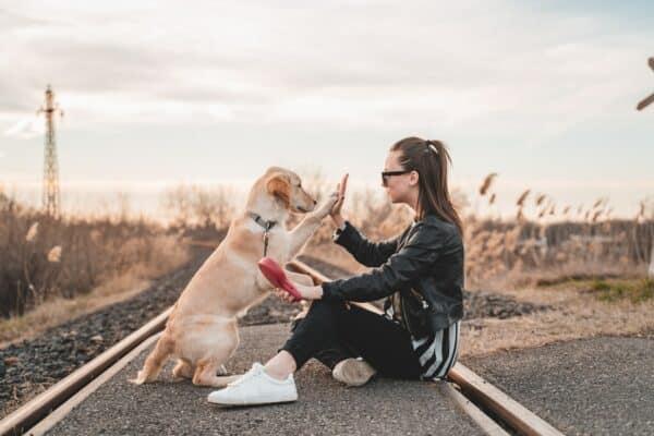 photo chien meilleur réussir belle original