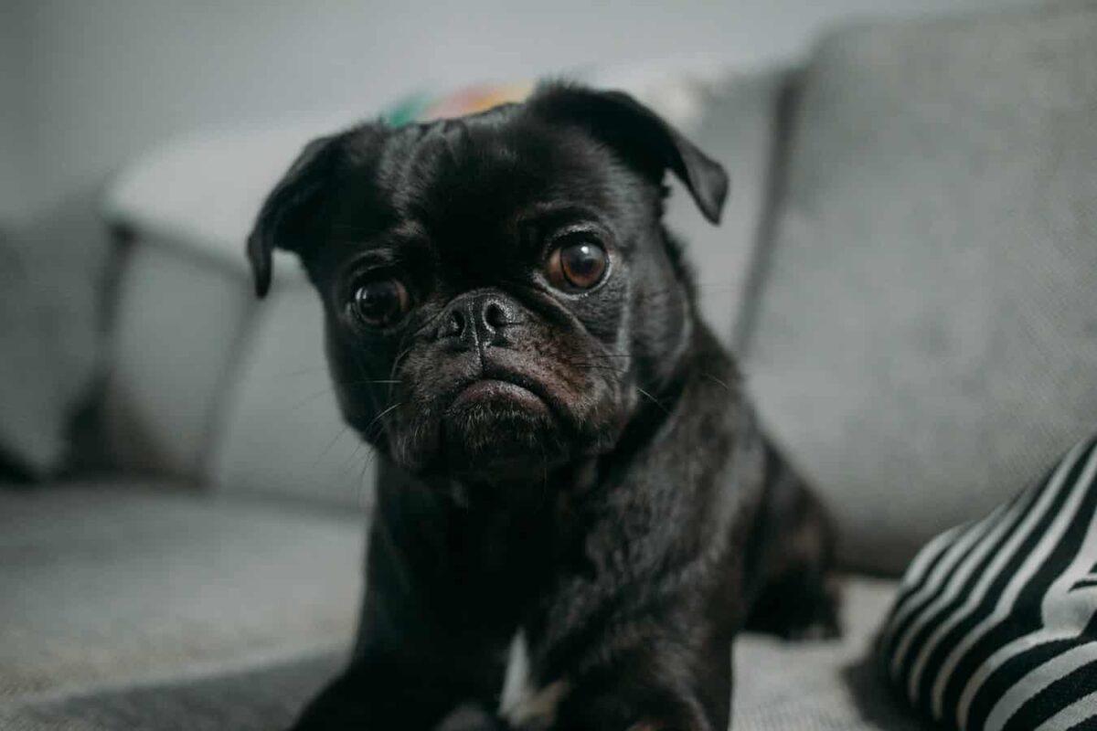 chien vomit eau grave pourquoi solution
