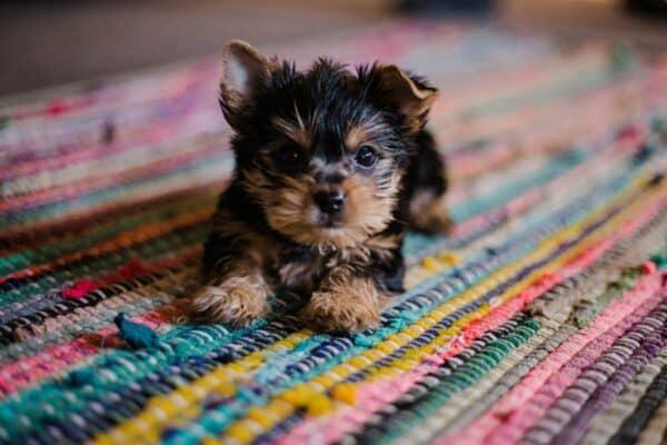 meilleur nom chien femelle chienne prénom