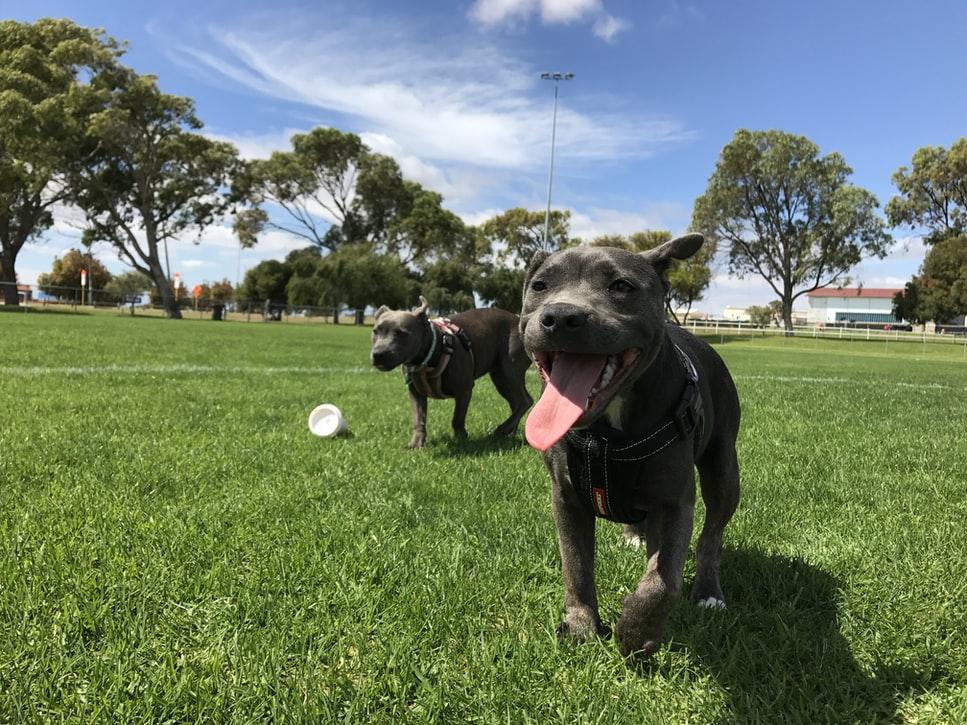 pension chien paris marseille toulouse bretagne morbihan finistère alsace creuse nord