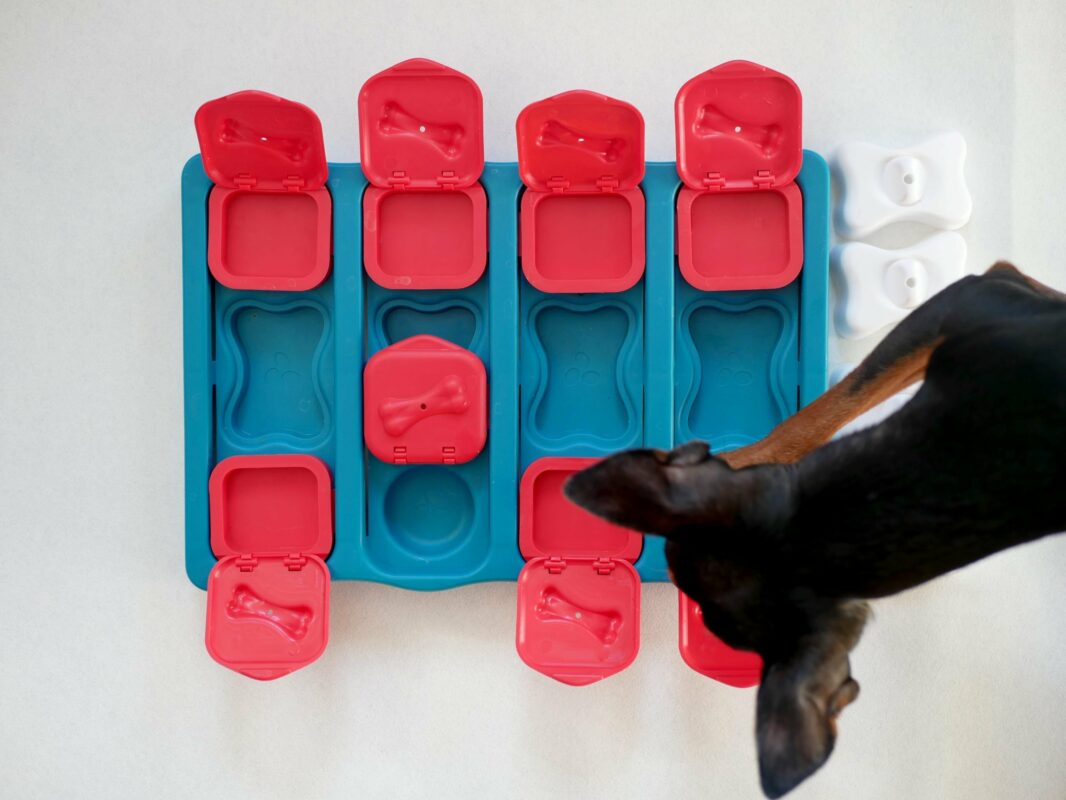 puzzle pour chien jouet