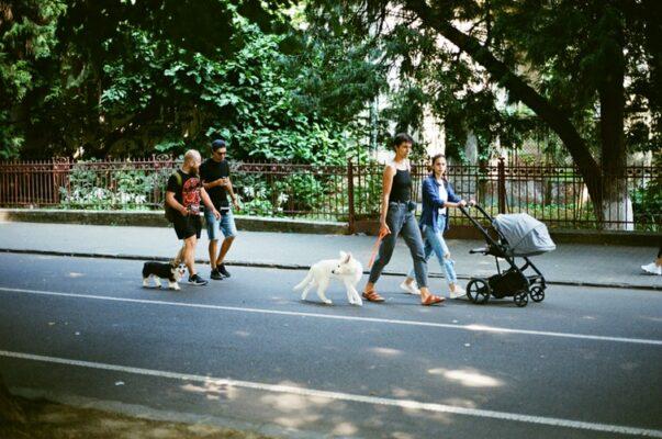comportement chien incontrôlable fou voit autre chien
