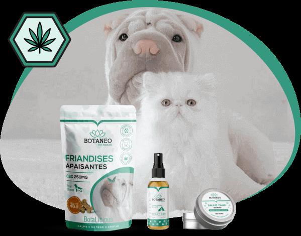 Spray Huile CBD calmant, friandises CBD apaisantes et baume nourrissant au CBD pour chien et chat. Feuille de chanvre.