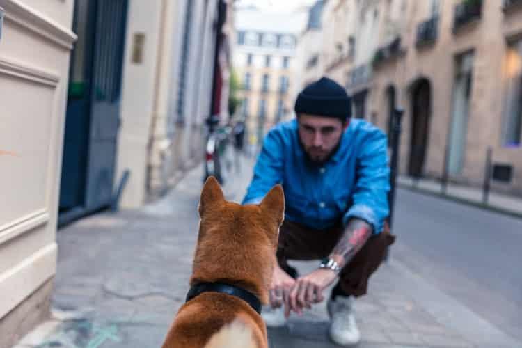 Lieu promenade paris chien
