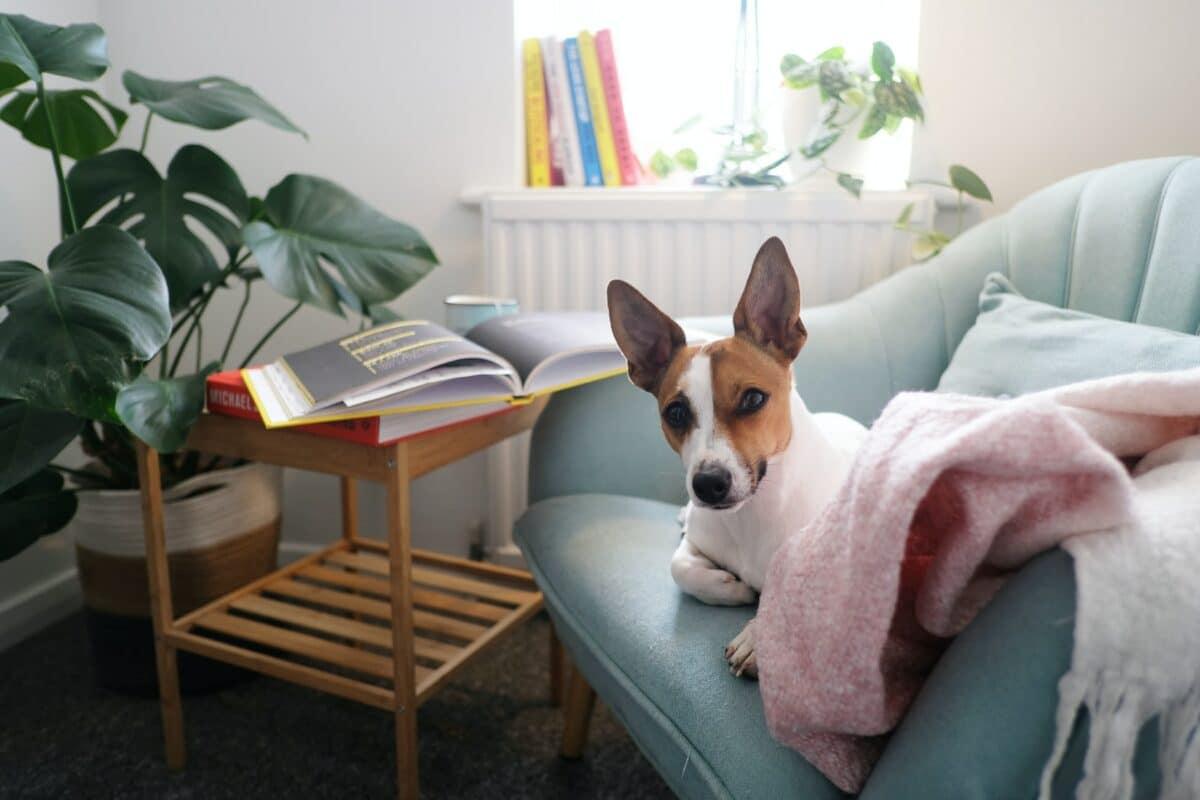 allergie acarien chien symptôme signe traitement