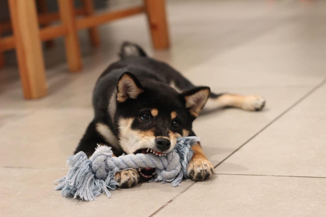 geste secour chien étouffe