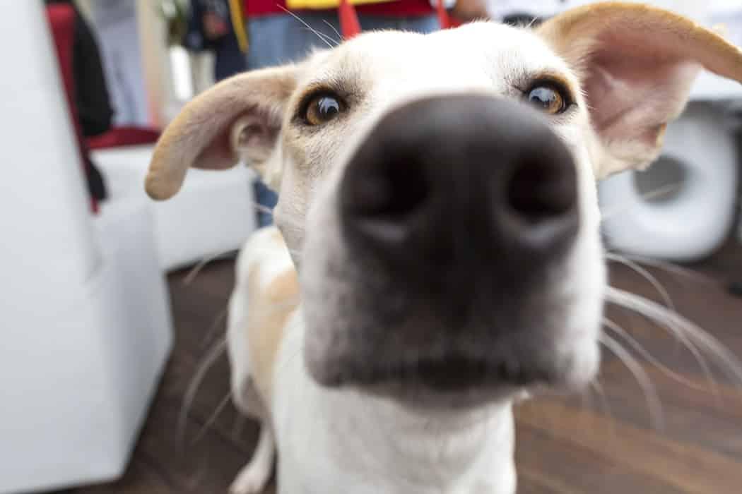 chien qui éternue raison soin traitement maladie