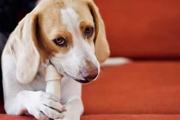 acheter os a macher chien meilleur avis danger achat
