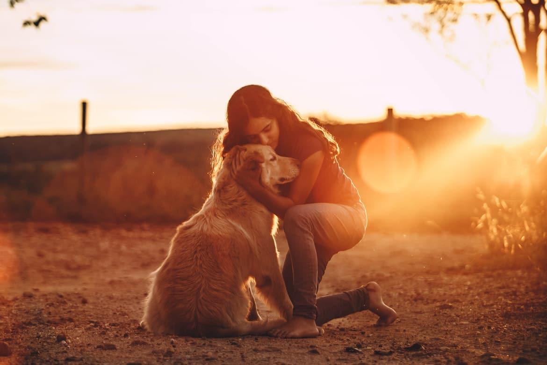 chien et fille calin couché craintif apprivoiser de soleil campagne labrador