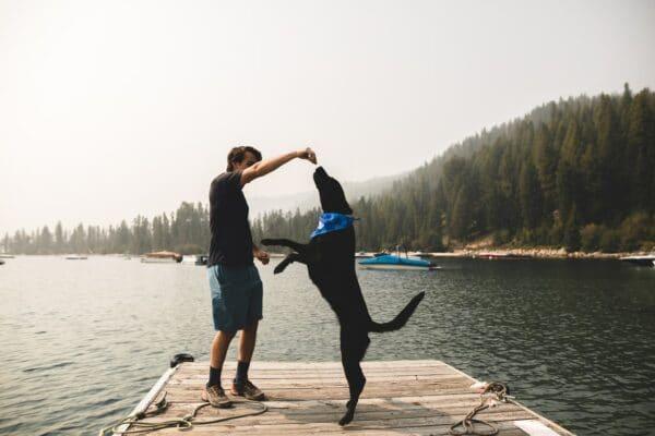 Comment apprendre à son chien à faire le beau
